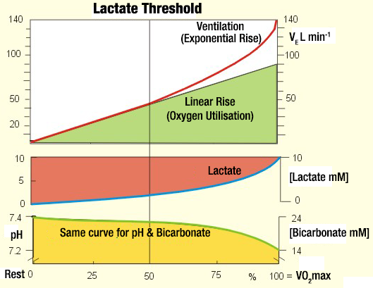 Anaerobic-threshold-+-ventilation-+-bicarbonate