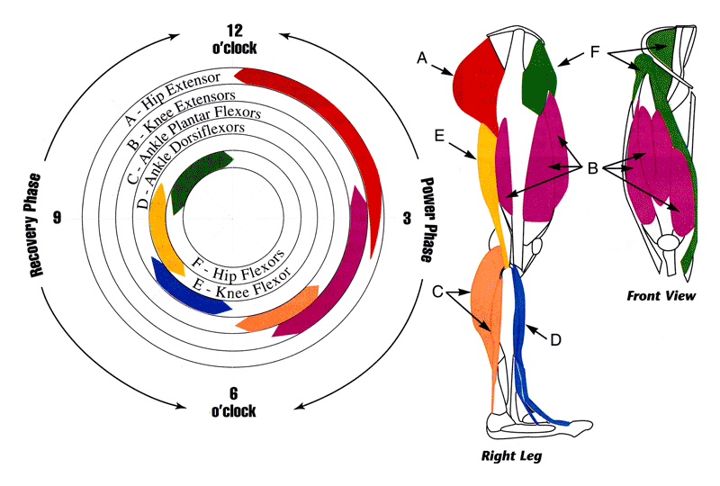 cycling pedal stroke