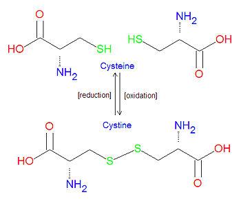 cystine vs cysteine