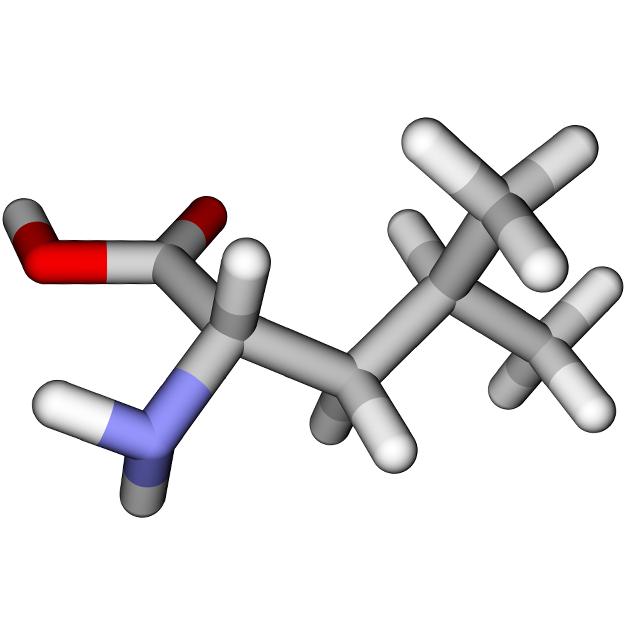 L Leucine Molecular Structure