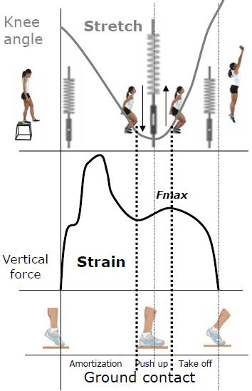 ssc diagram - plyometric