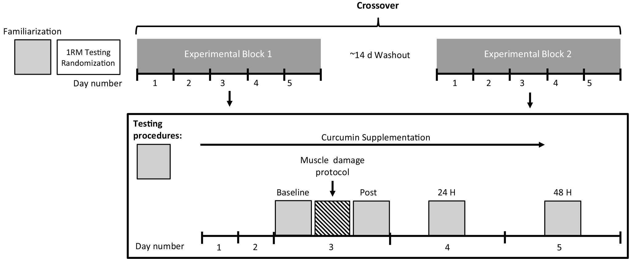 Curcumin study design