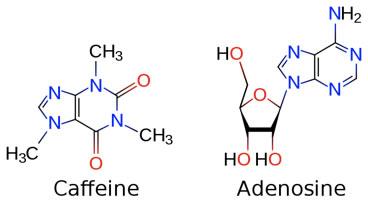 caffeine_adenosine_molecules