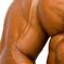 Choosing the Best Testosterone Supplements