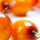 Latest Research News - Sea Buckthorn Berry for Heart Health