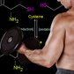Cystine-Rich Whey vs Casein for Strength in Elderly