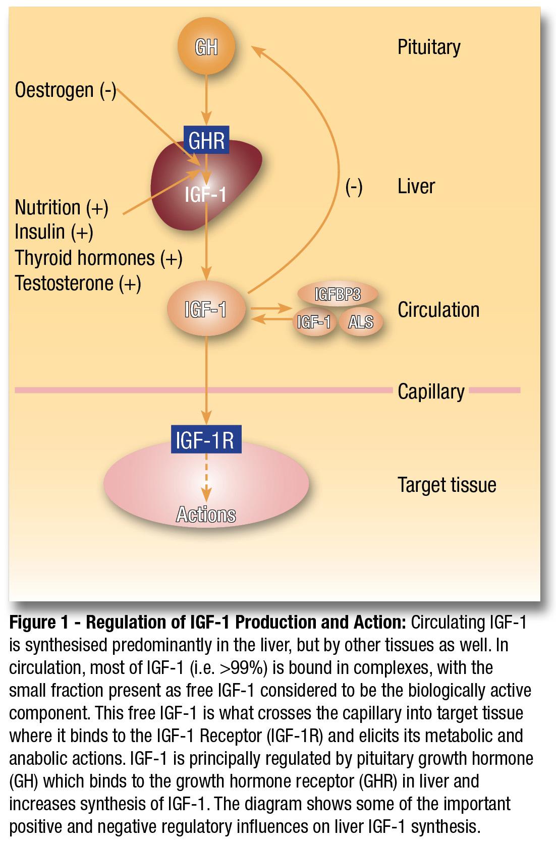 IGF-1 by Elemental Nutrition - MrSupplement.com.au Australia