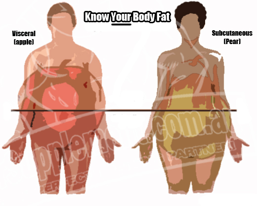 Visceral Fat Vs Subcutaneous Fat 104