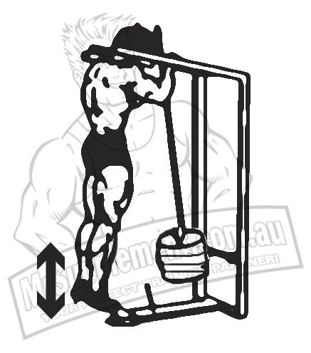standing calf raise no machine